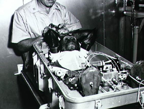 Mercury, Ham, Enos, šimpanzės